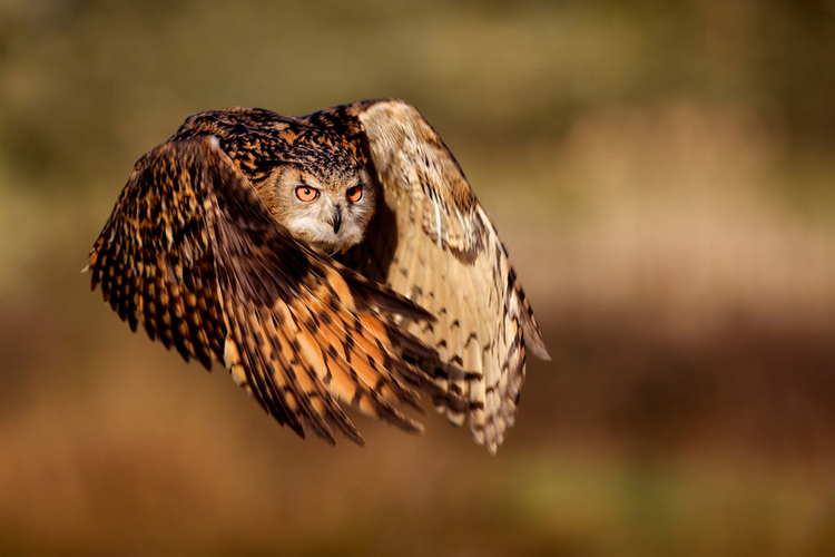 (via  National Geographic Photo Contest 2011 - The Big Picture - Boston.com )