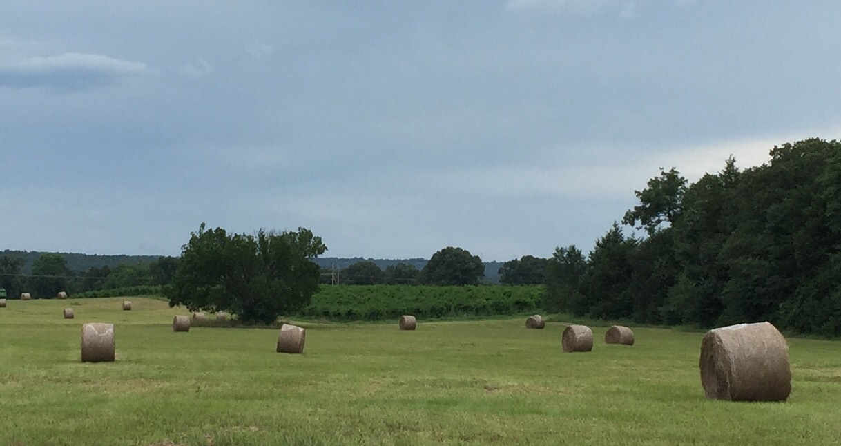 View of the hay field and vineyard's edge.