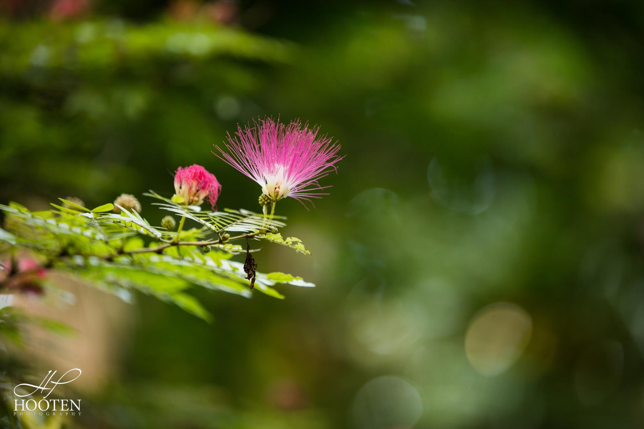 Hooten Photography-0924.jpg