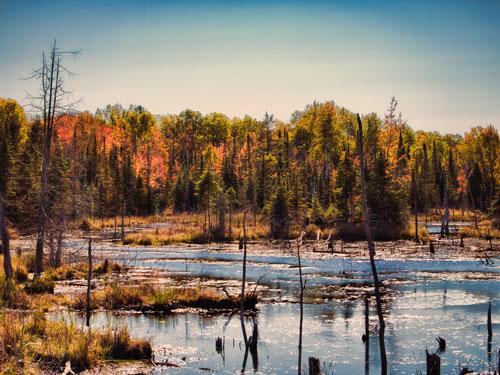 Autumn Wetland