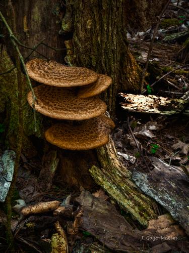 Stack of Fungi by J. Gazo-McKim ©2013