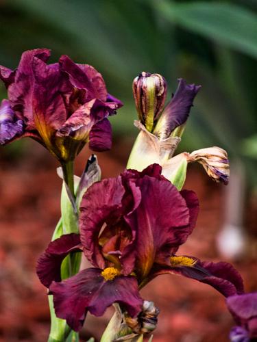 Blooming Magenta and Purple Beauties