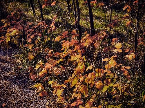 Fall's last Hurrah HDR Photography by J. Gazo-McKim ©2013