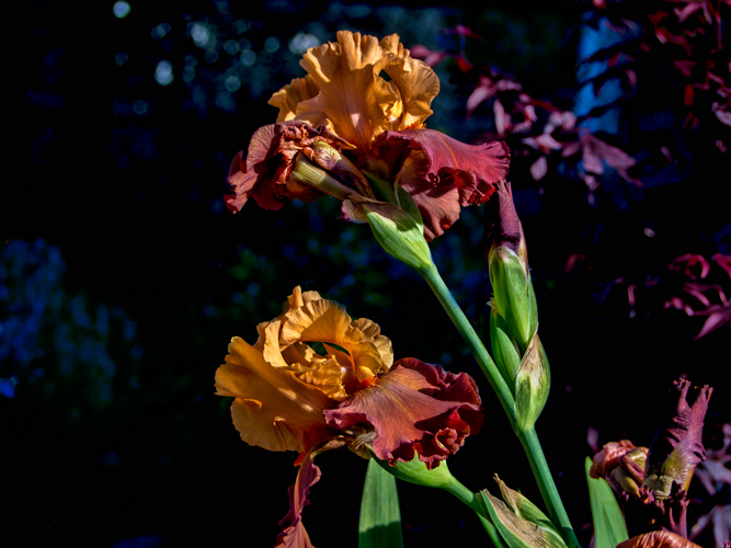 Rusty Petals by J. Gazo-McKim ©2012