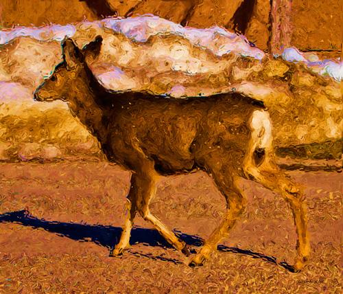 Deer in a Different Light by J. Gazo-McKim©2013