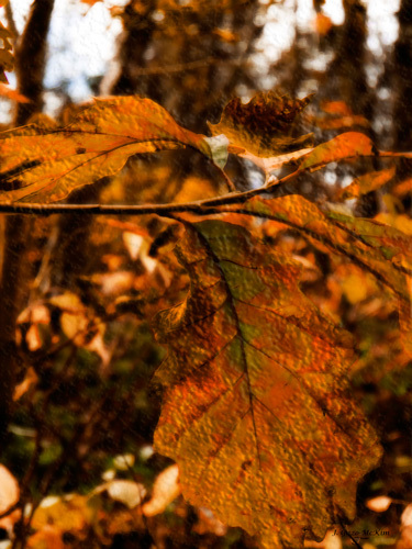 Old Fashioned Foliage Digital painting by J. Gazo-McKim ©2013