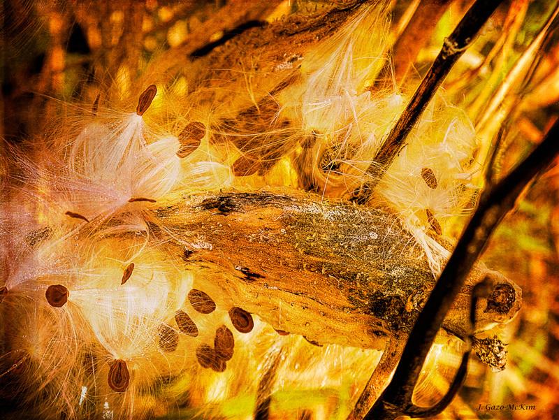 Spray of Sienna by J. Gazo-McKim © 2013