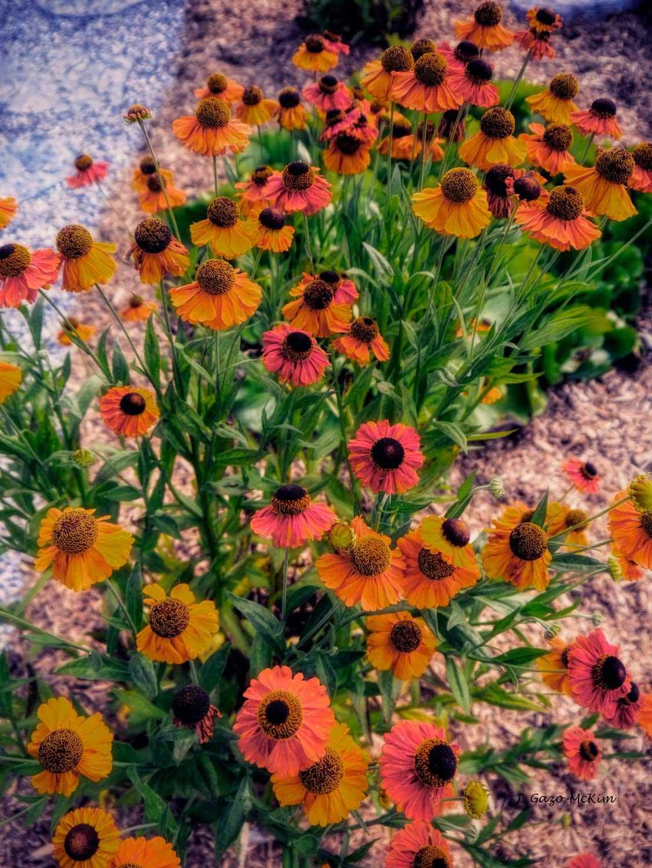 Flower Ballet Photography by J. Gazo-McKim ©2014