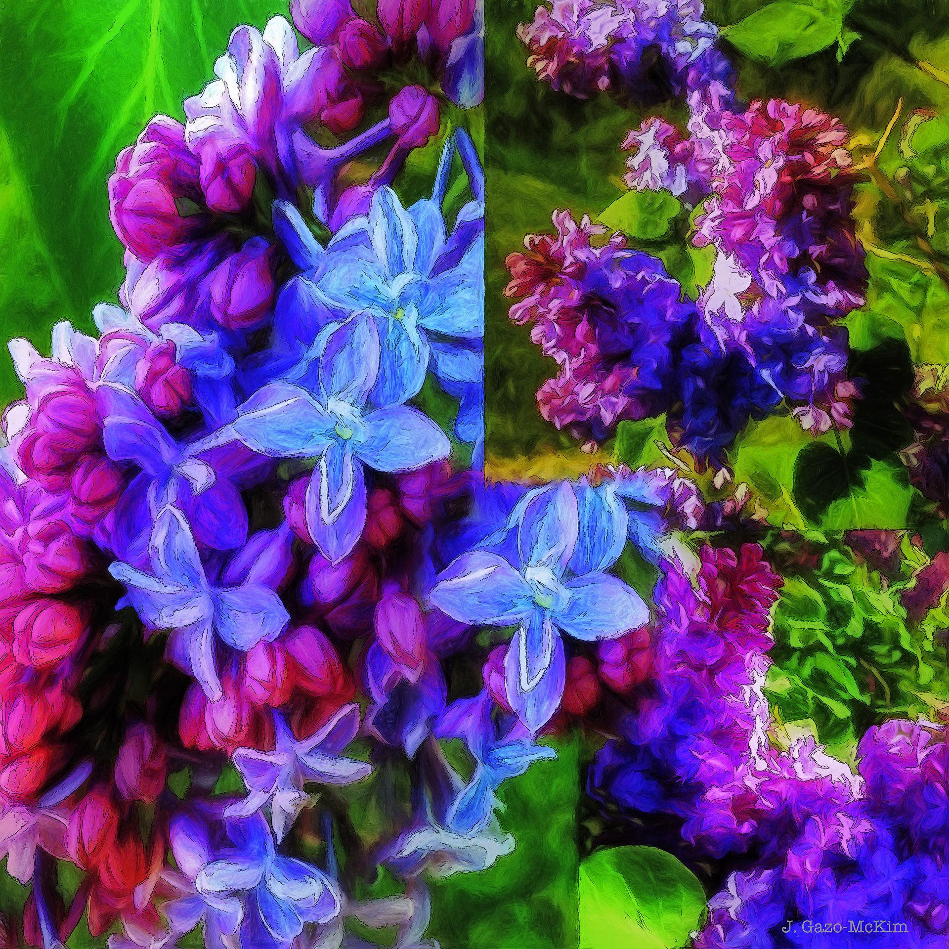 Cascading Lilacs by J. Gazo-McKim ©2015