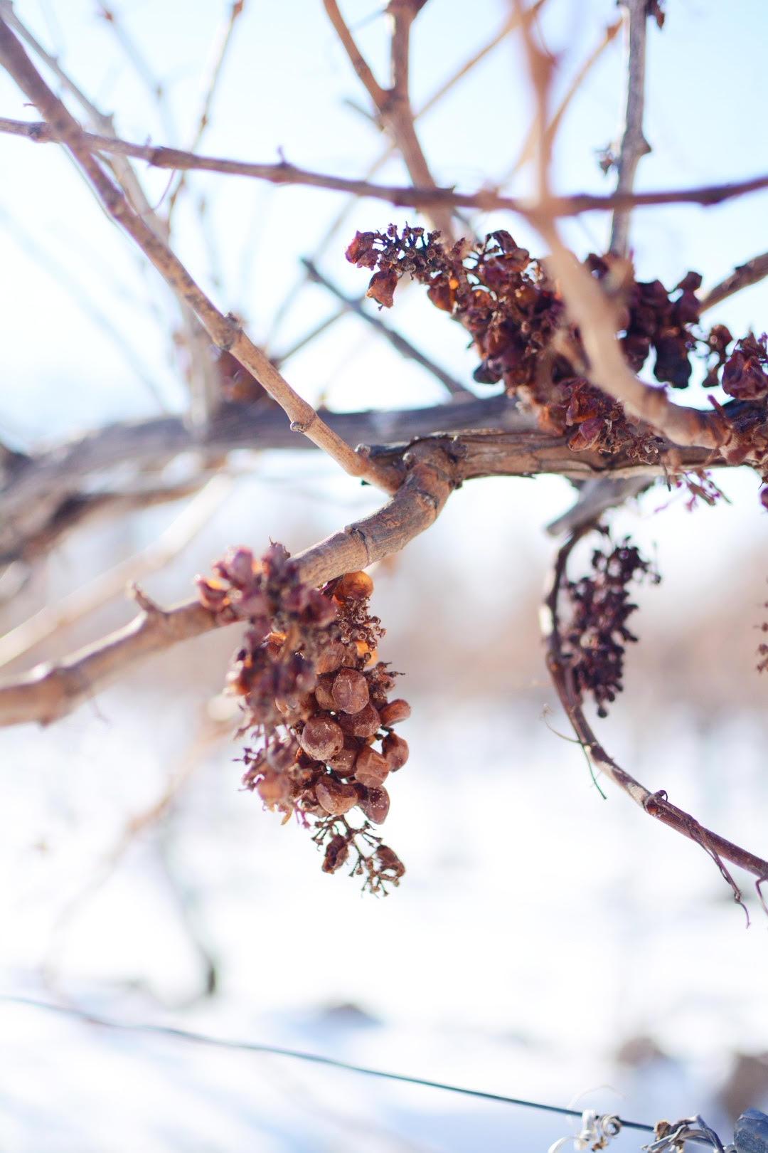 Niagara Creekside Winery