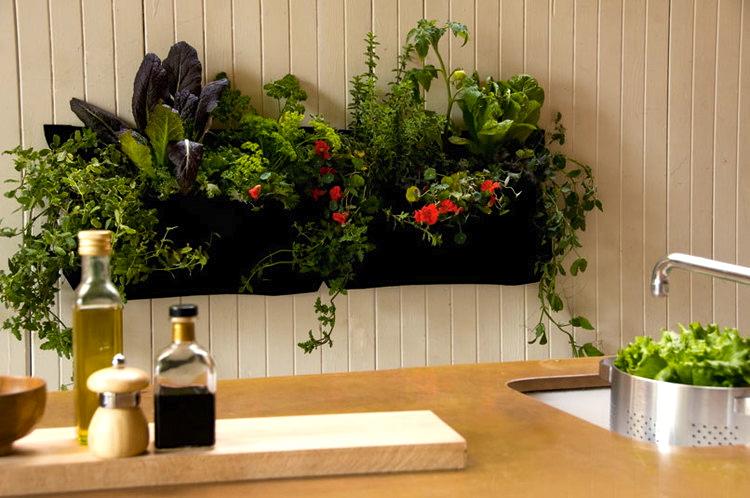 Wally Kitchen.jpg
