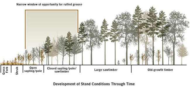 grouse_habitat_wild_turkey_forest_chart.jpg