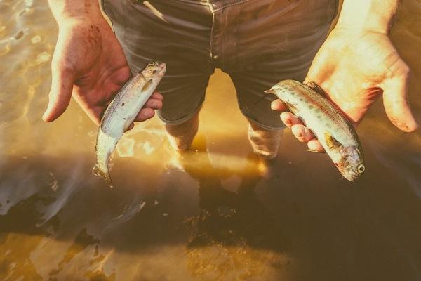 Circa 1983 x Up Knorth - Fly Fishing Madeley Lake
