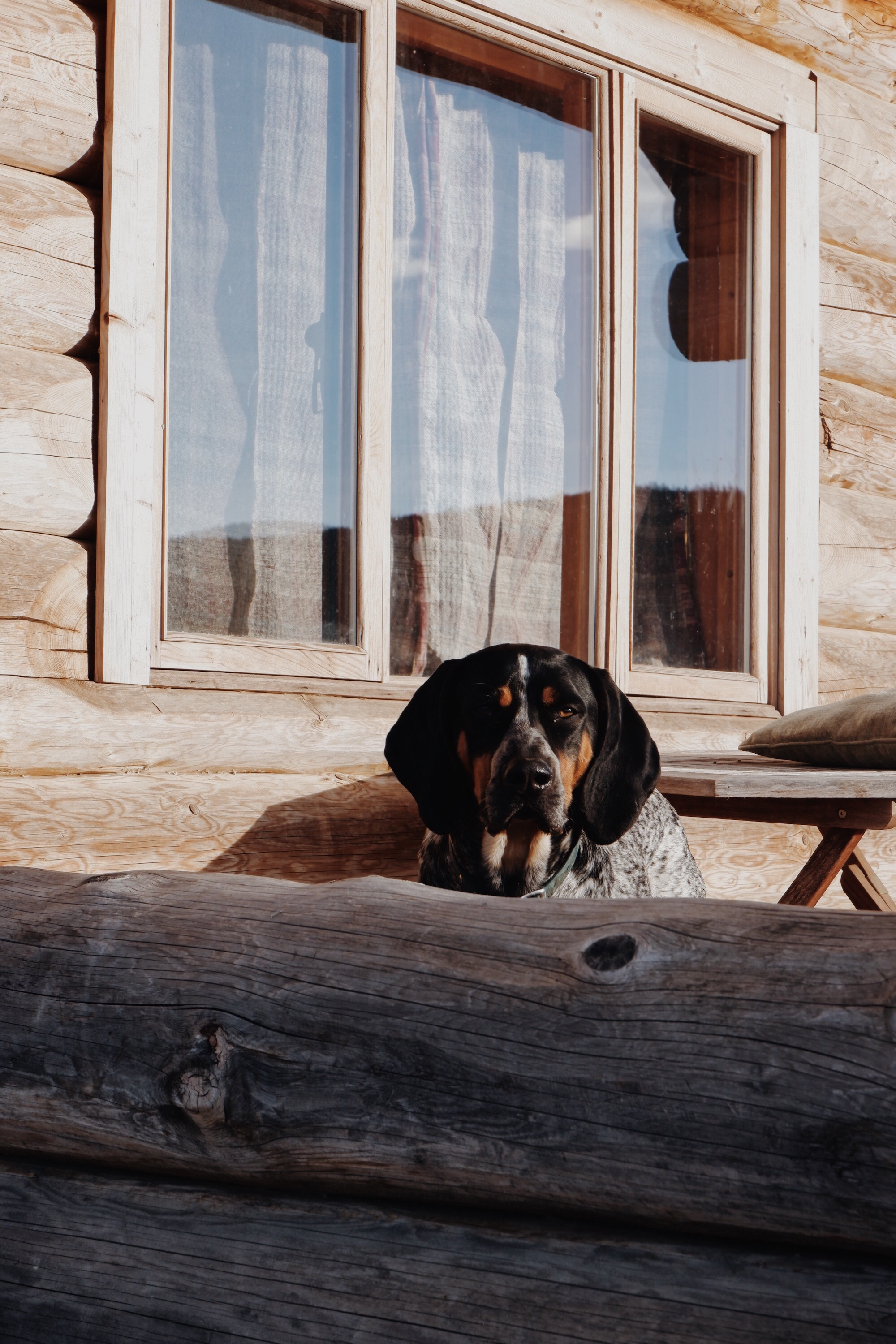 Beau, resident ranch dog with the sweetest heart.
