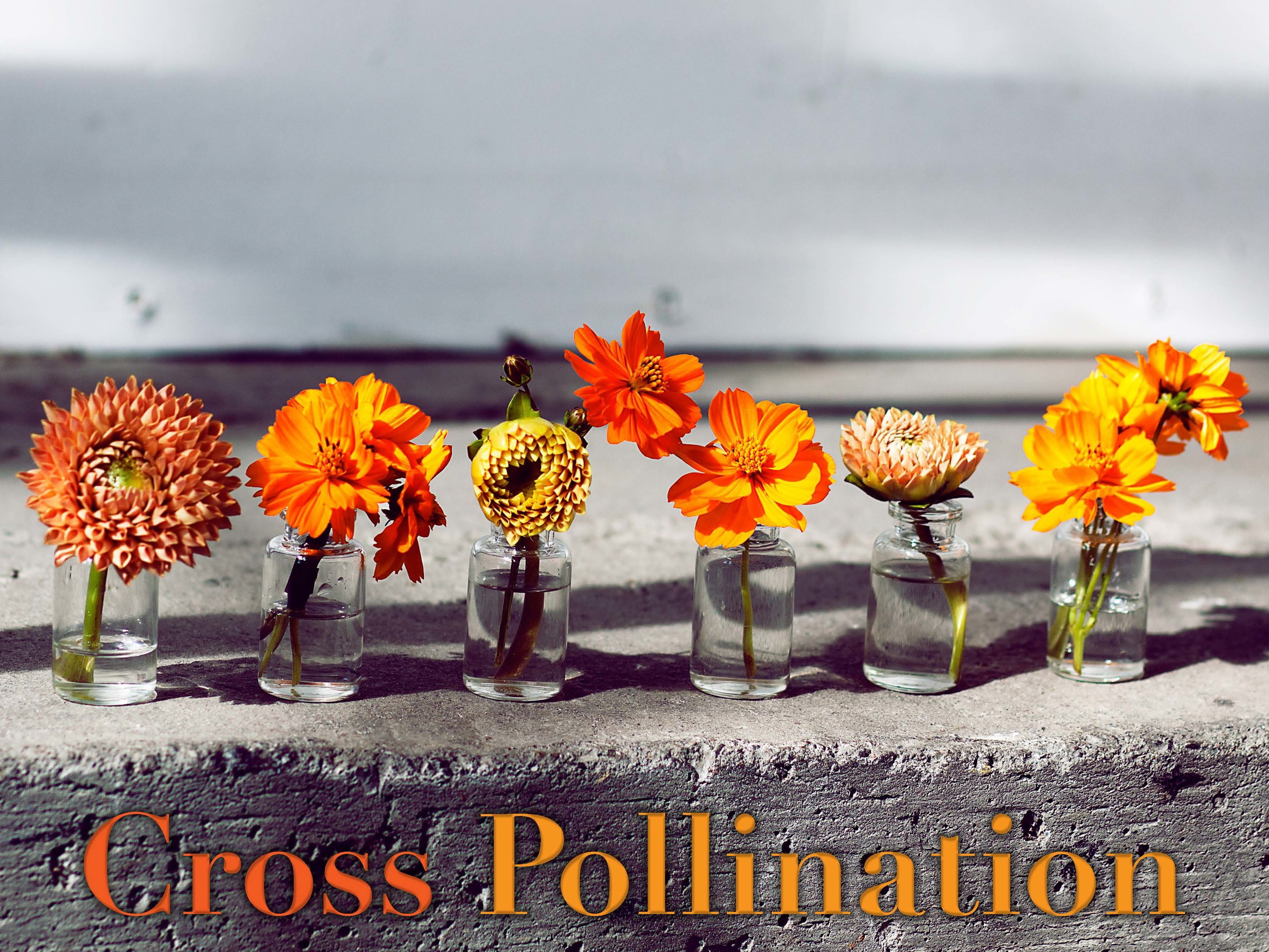 The_Thinkery_Cross_Pollination_Page_1.jpg