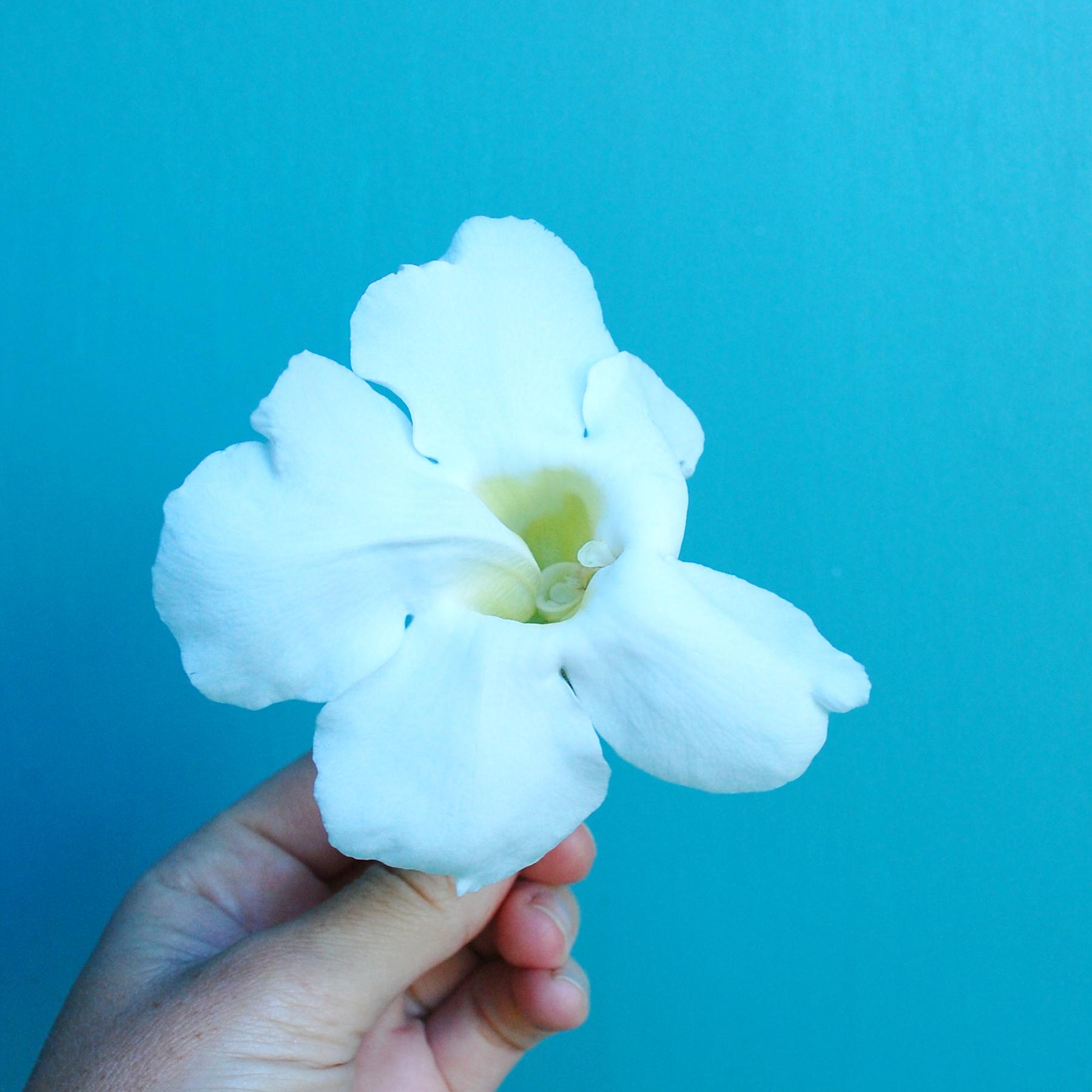 Inspir_Gord_Vine_White_Flower_00.jpg