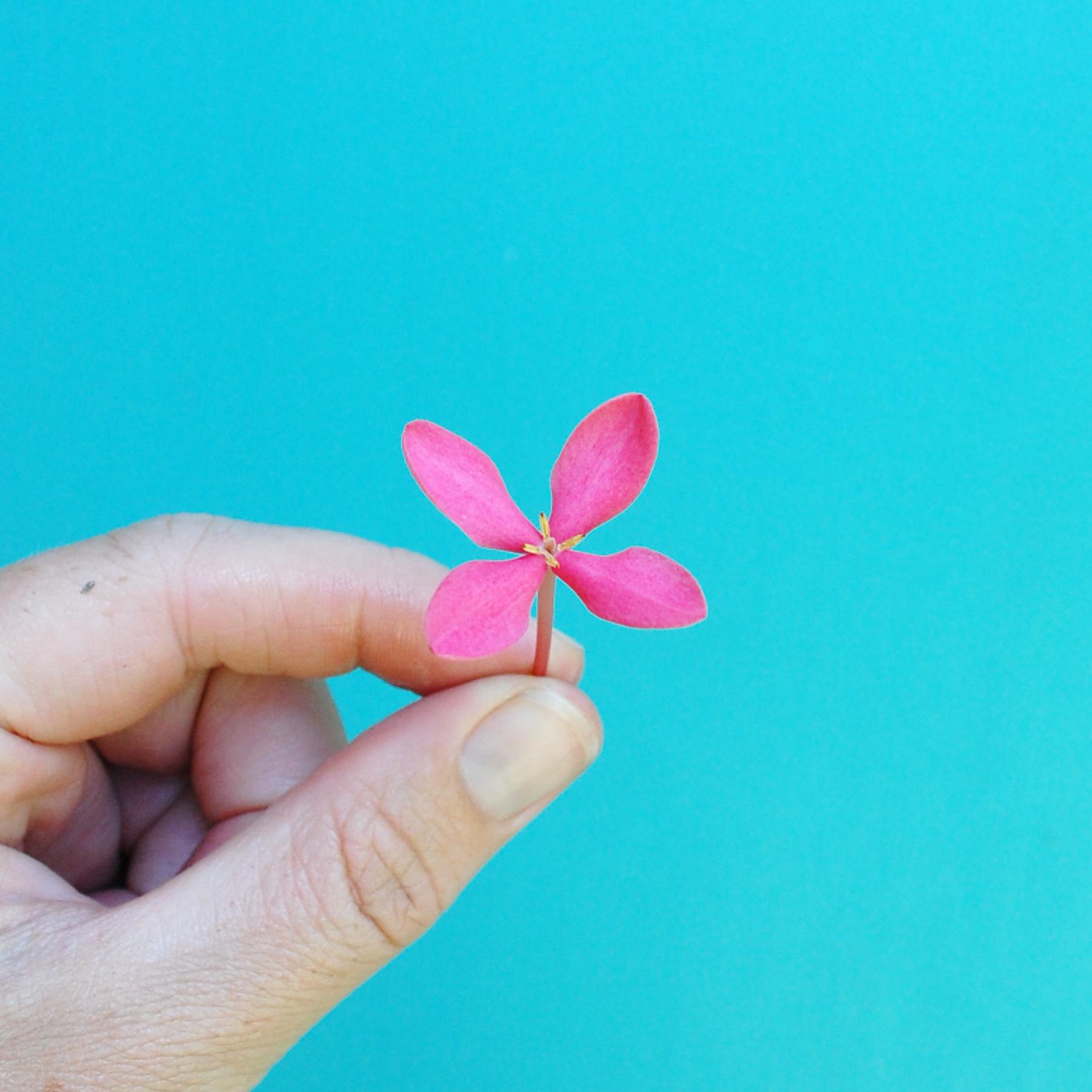 Pink Bush Flower