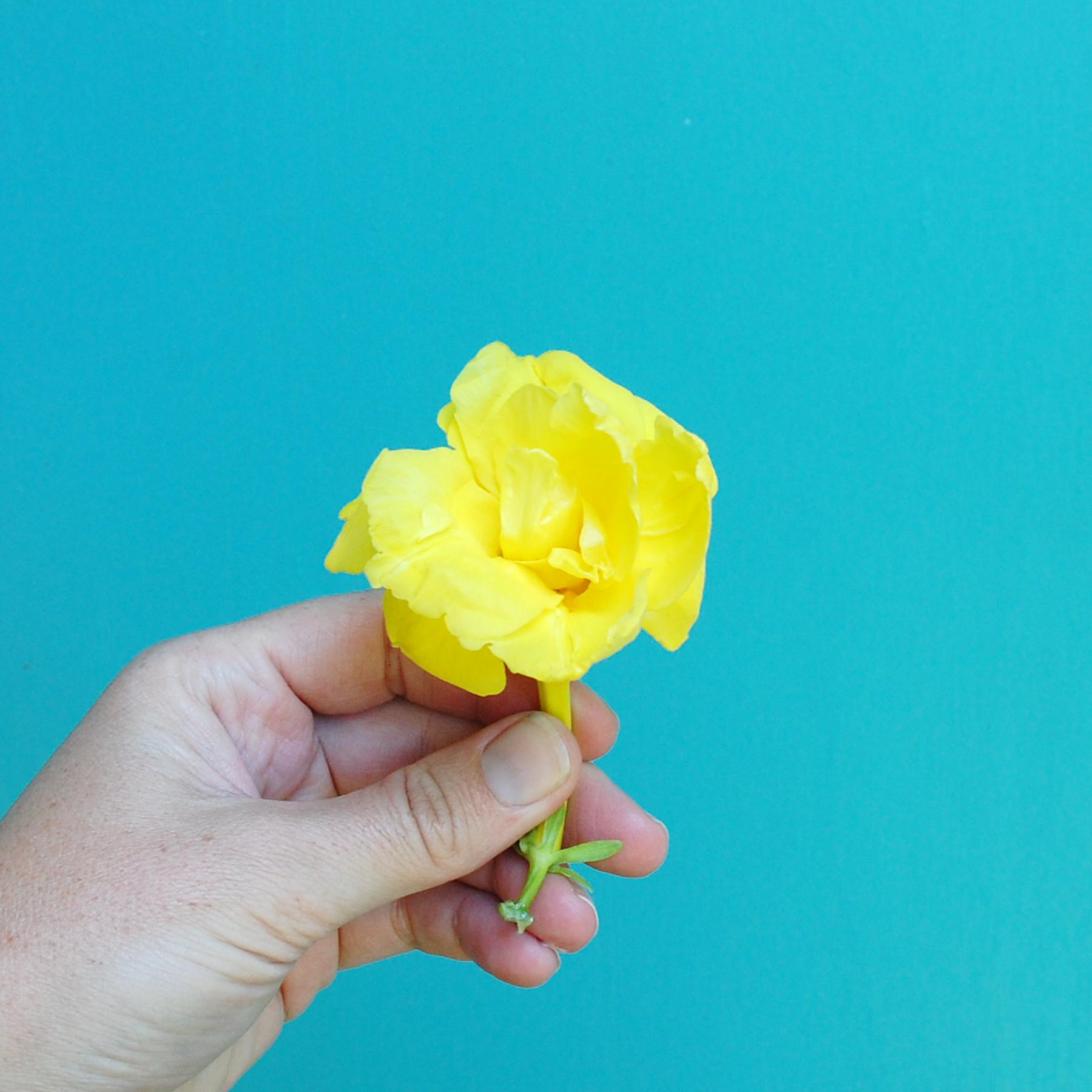 Inspir_Yellow-Misc-01.jpg