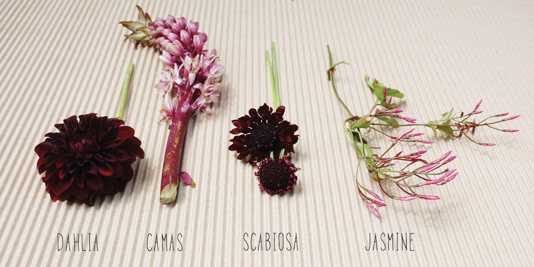 Flowers_Types.jpg