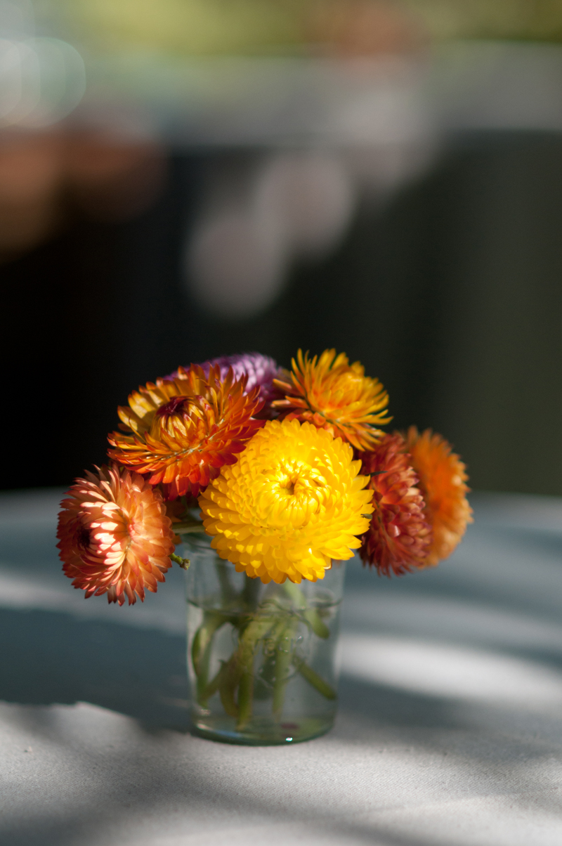 Stawflower_Arrangement.jpg