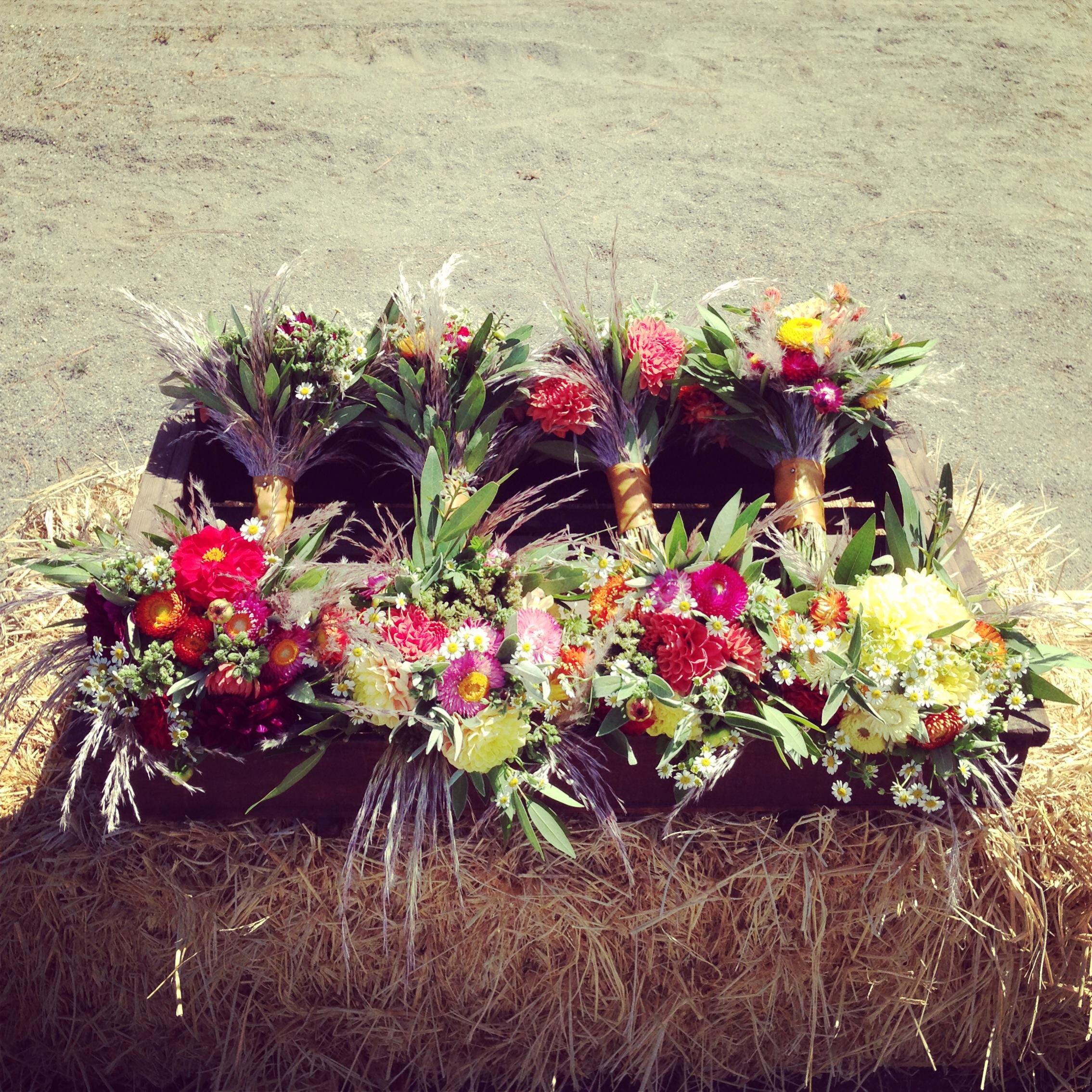Mayacamas Ranch Wedding