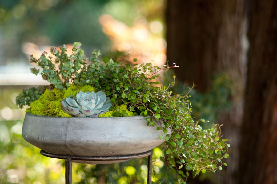 Ceremony-Planted-Arrangements.jpg