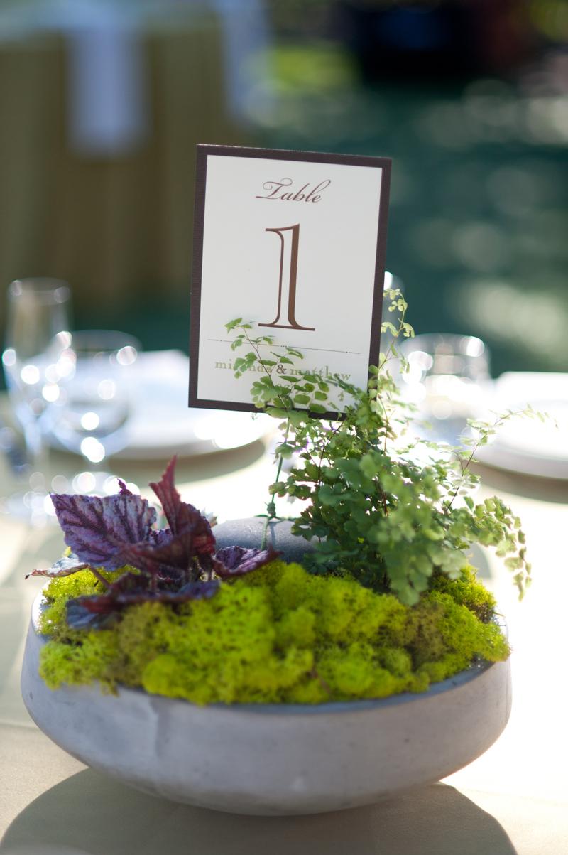 Wedding-Centerpiece-Potted-Plants.jpg