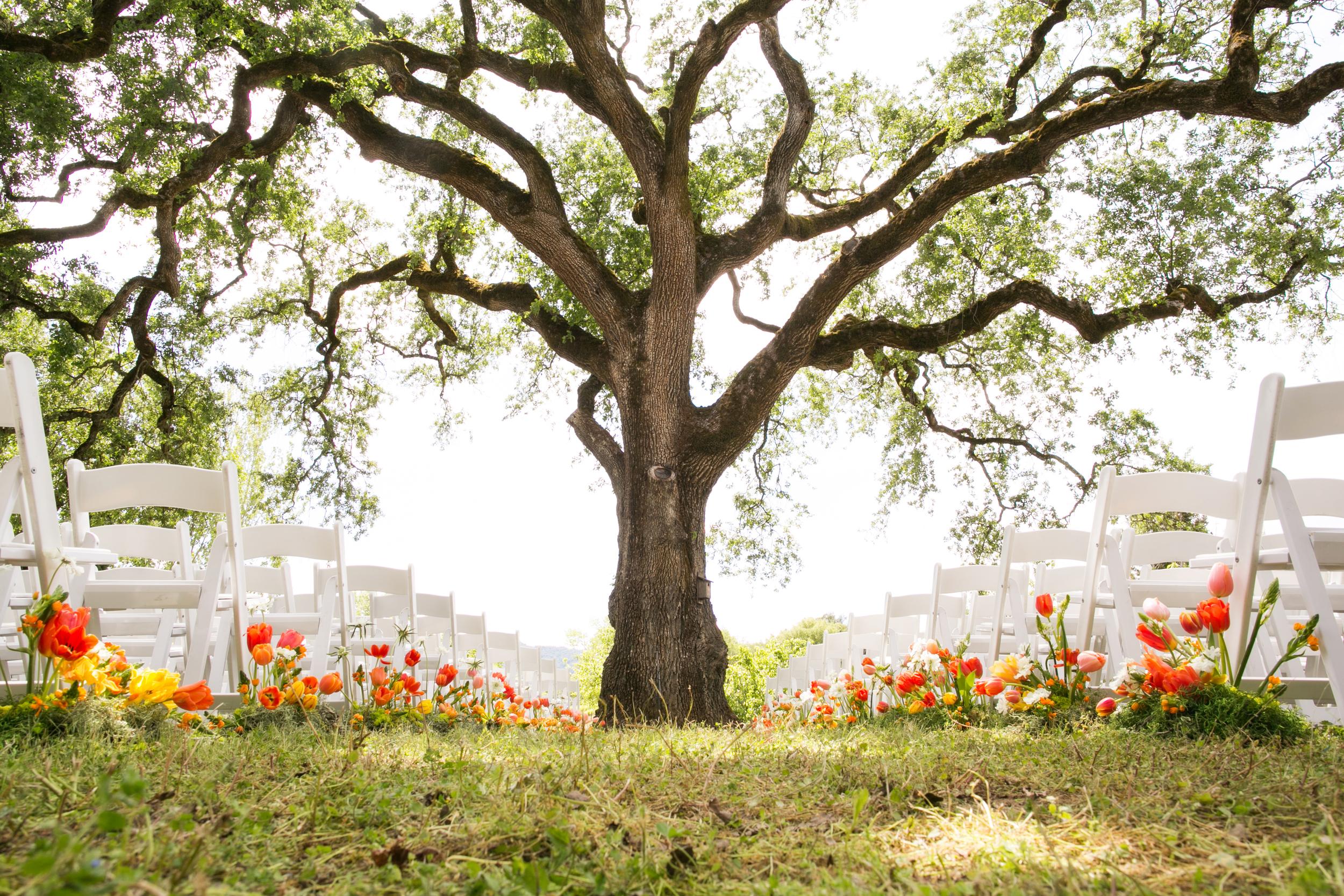 campovida-wedding-ceremony-oak-tree.jpg