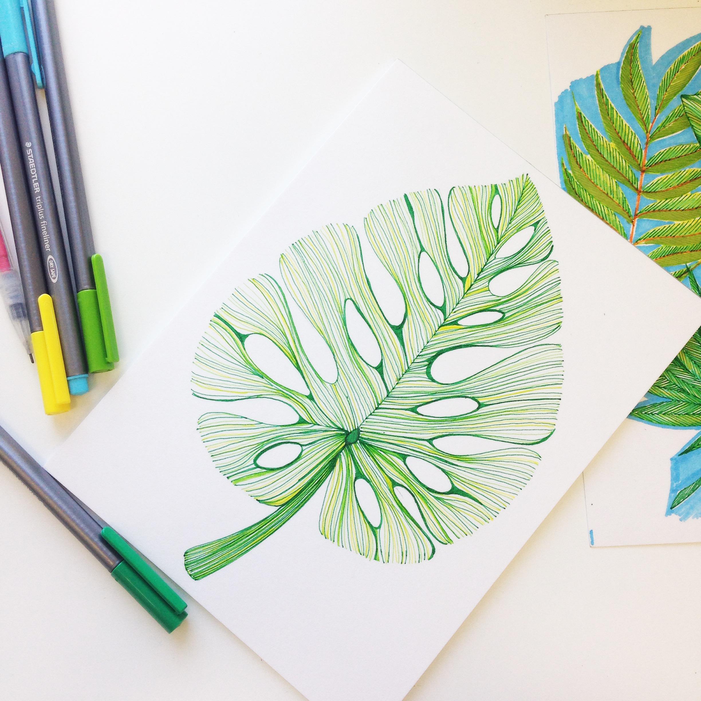 montera leaf tropical plants illustration trait