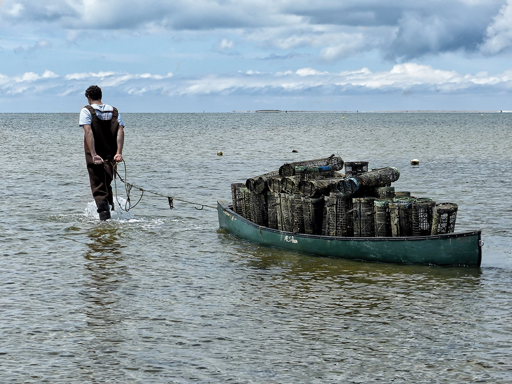 All in a Day of Oyster Farming