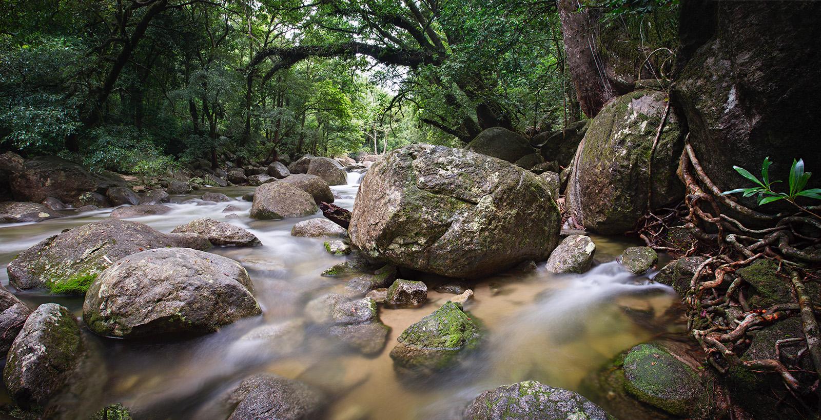 Mossman Gorge, Daintree Rain Forest, Queenland, AUSTRALIA