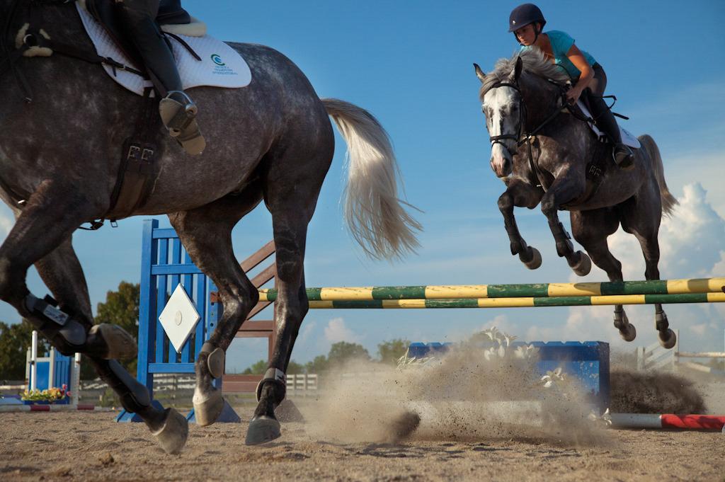 equus-5.jpg