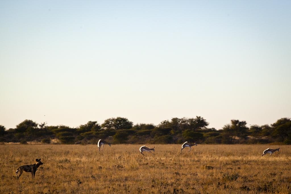 africa1-1.jpg