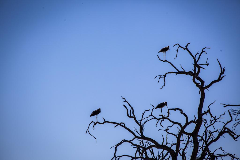 wildlife-17.jpg
