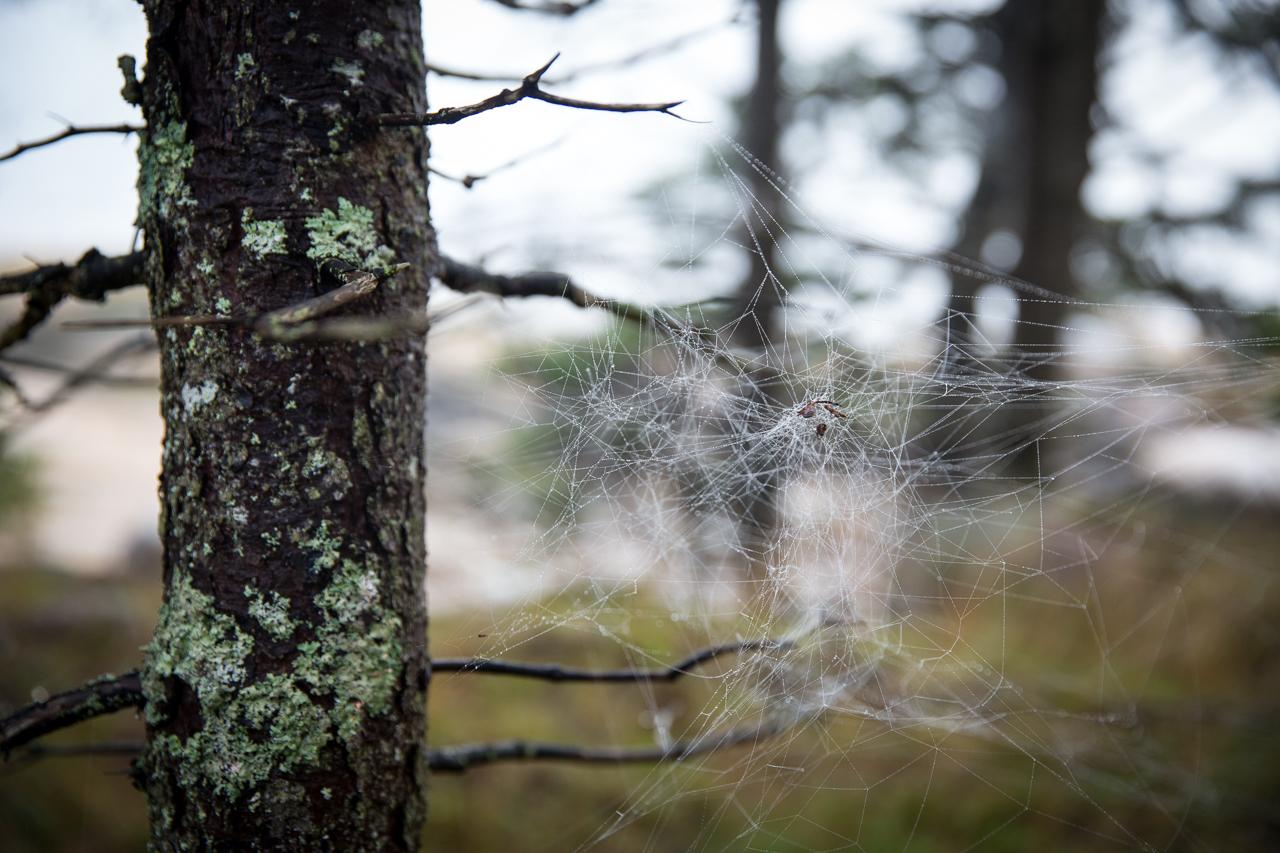 Coastal Detail, Spiderweb
