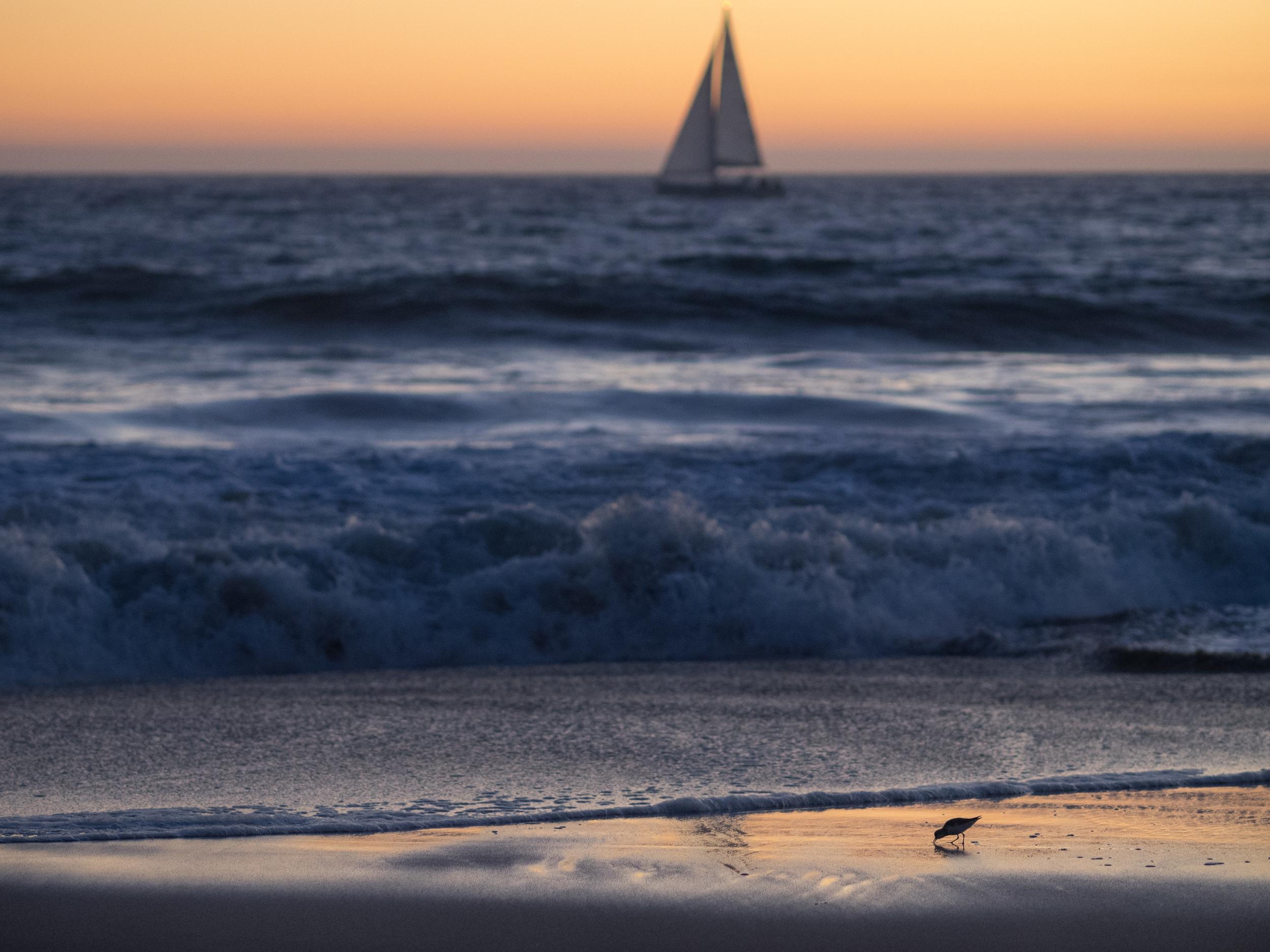 Sailboat & Sandpiper