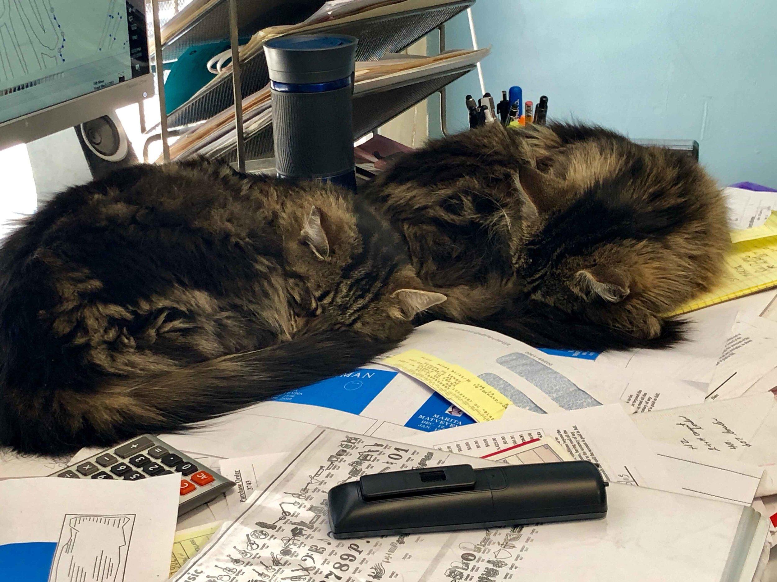 Twin kitties…I have twins too!