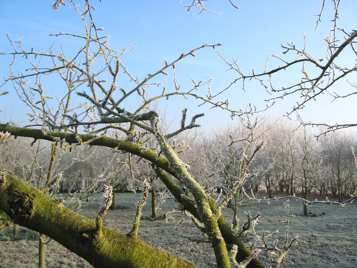 Frost in the orchard