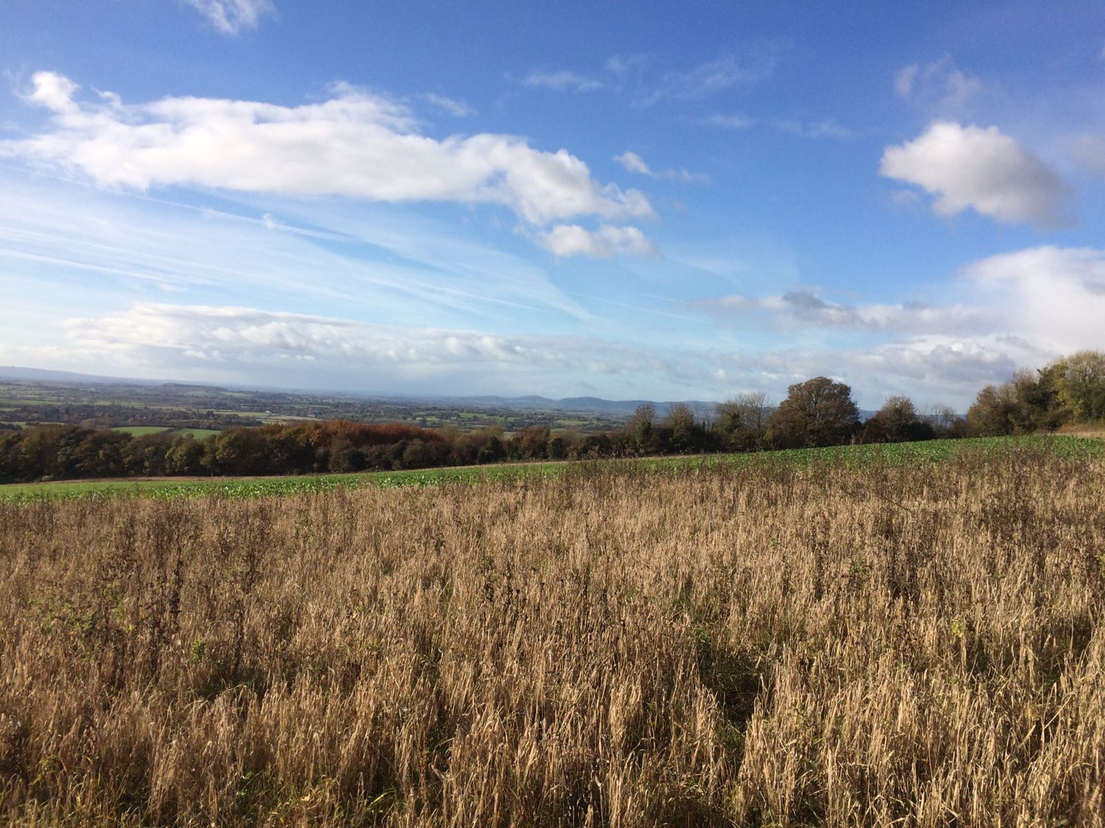Bredon Hill view in late Autumn