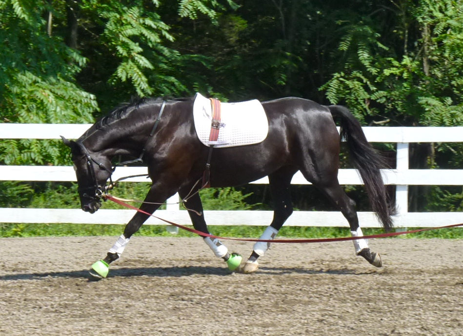 WE OFFER TRAINING SERVICES FROM STARTING YOUNG HORSES TO RETRAINING YOUR ATHLETE   MANY DIFFERENT PACKAGES AVAILABLE. email outfoxedfarm@aol.com for info