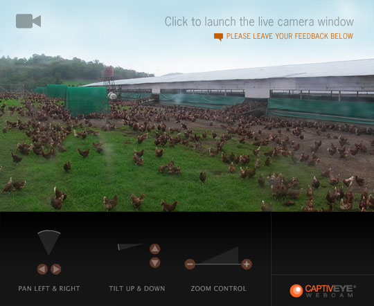 Chookcam-placeholder-CS.jpg