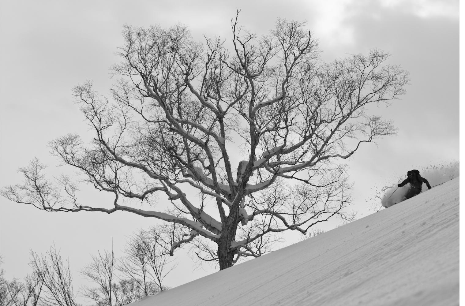 Stevie Brawwn, Hokkaido, Japan