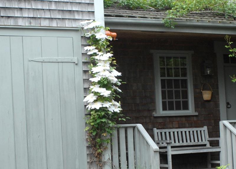vine_with_flowers_32.jpg