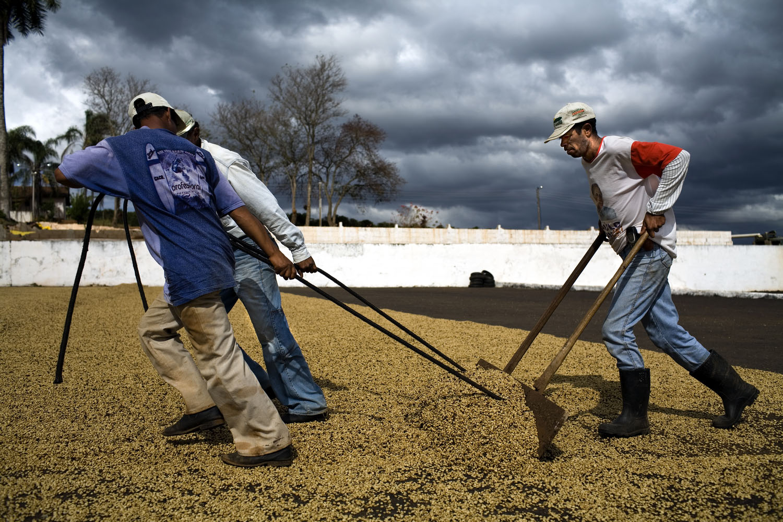 Cafe Bom Dia Plantation Workers