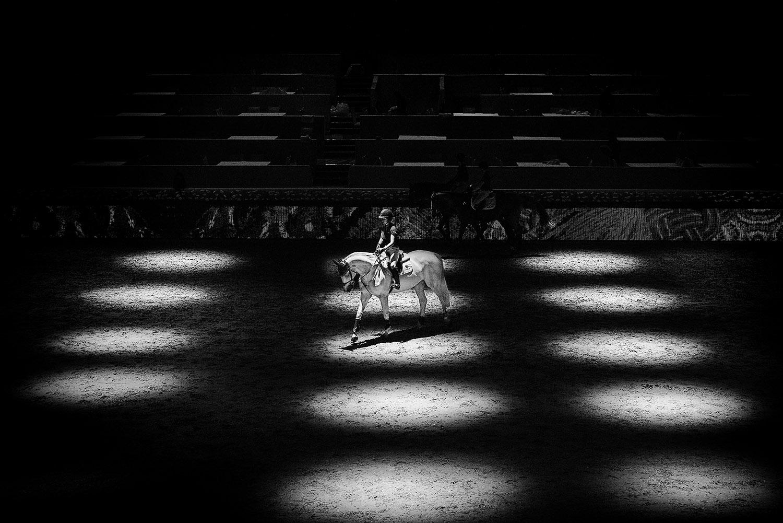 HorseWeb_001.JPG