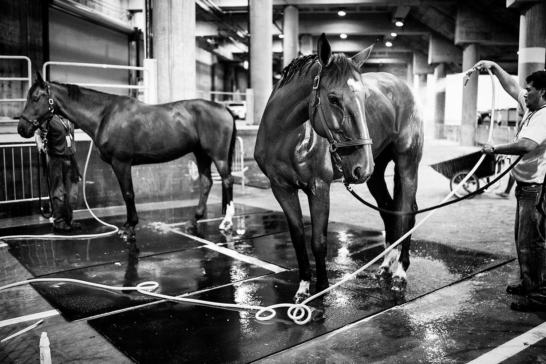 HorseWeb_006.JPG
