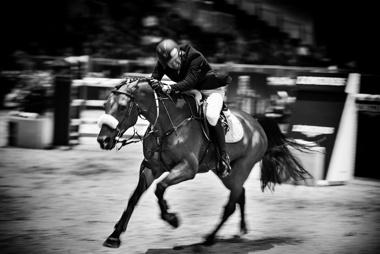 HorseWeb_010.JPG