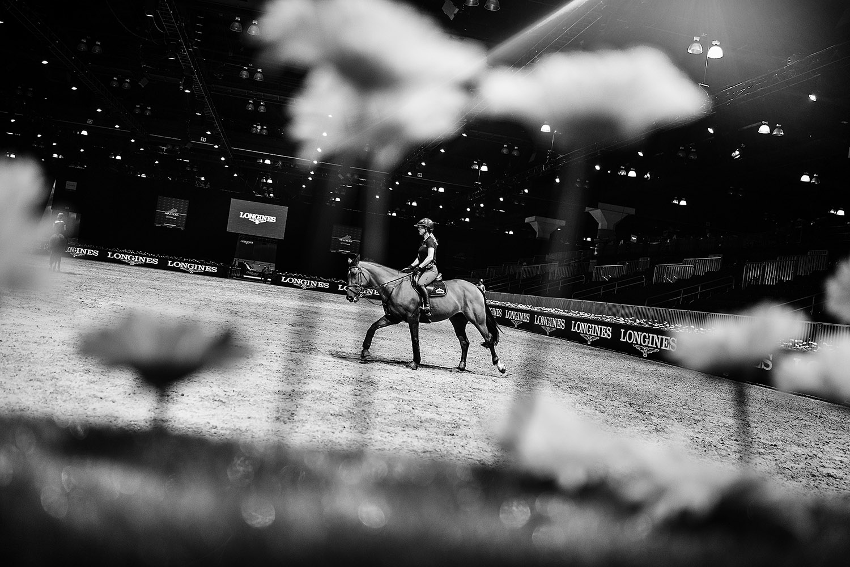 HorseWeb_016.JPG