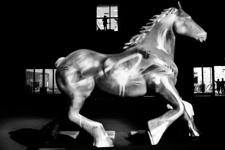 HorseWeb_017.JPG