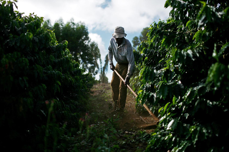 Cafe Bom Dia Crop Worker